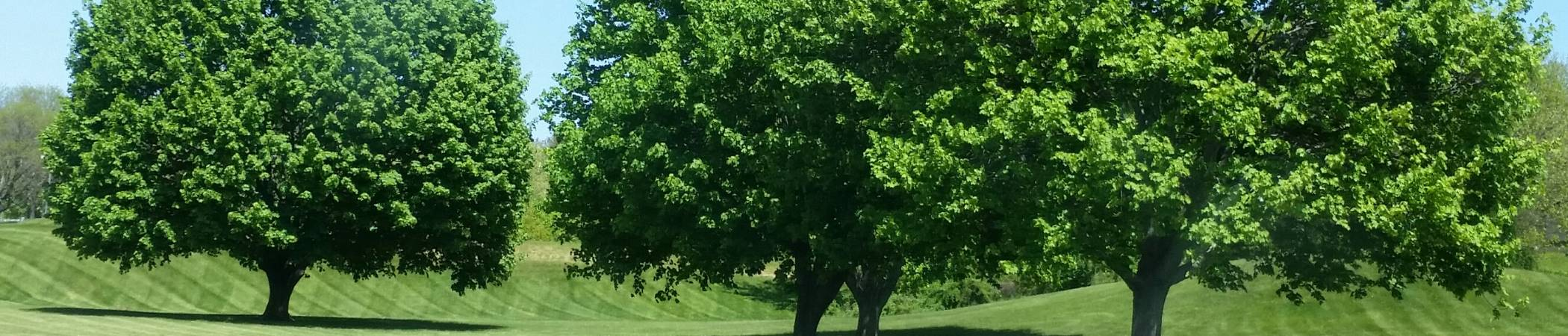 Tatia Winecoff State Farm Insurance (203) 269-9330 Offering Home, Life, Auto Insurance